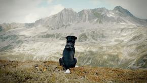 Cody - Wie ein Hund die Welt verändert Szenenbild 1