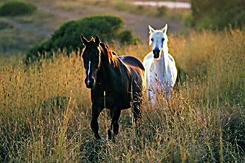 Meine liebsten Pferdefilme Szenenbild 7