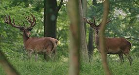 Auf der Jagd Szenenbild 1
