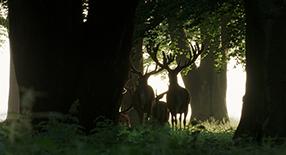 Auf der Jagd Szenenbild 4