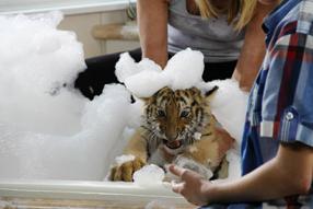Tiger, Tatzen und TamTam Szenenbild 5