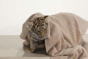 Tiger, Tatzen und TamTam Szenenbild 7