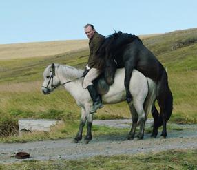 Von Menschen und Pferden Szenenbild 1