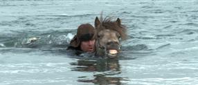 Von Menschen und Pferden Szenenbild 8