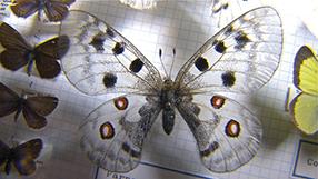 Der Schmetterlingsjäger Szenenbild 1