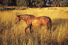 Ich liebe Pferde Szenenbild 1