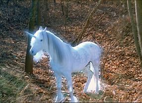 Ich liebe Pferde Szenenbild 3
