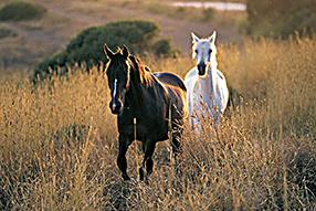 Ich liebe Pferde Szenenbild 10