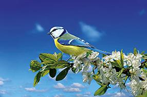 Singvögel Szenenbild 1