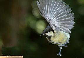 Singvögel Szenenbild 2