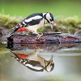Singvögel Szenenbild 4