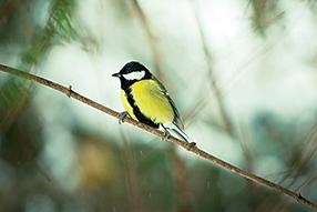 Singvögel Szenenbild 6