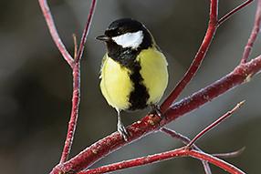 Singvögel Szenenbild 7