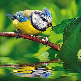 Singvögel Szenenbild 8