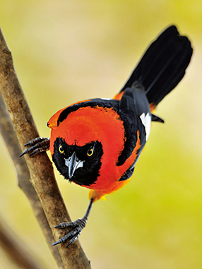 Singvögel Szenenbild 9