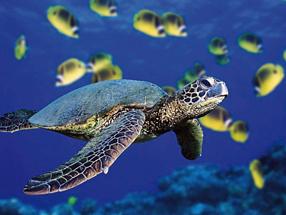 Planet Ocean Szenenbild 3