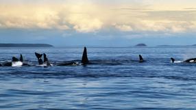 Blackfish - Der Killerwal Szenenbild 4
