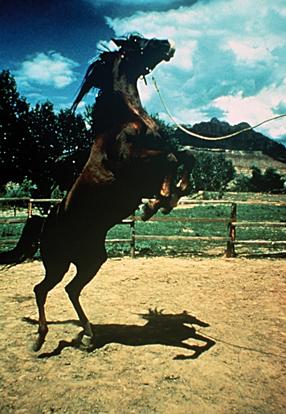 Ein Leben für Pferde Szenenbild 1
