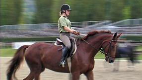 Ein Leben für Pferde Szenenbild 4