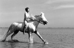 Ein Leben für Pferde Szenenbild 5