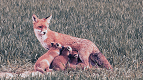 Tiere unserer Heimat Szenenbild 1