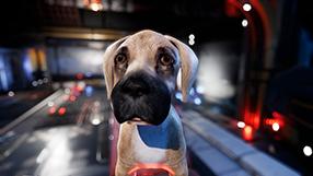 Dog Patrol Szenenbild 2