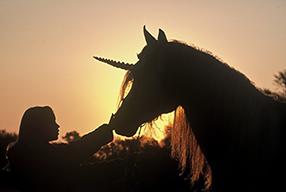 Ein Herz für Pferde Szenenbild 1