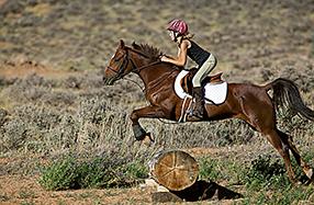 Ein Herz für Pferde Szenenbild 2