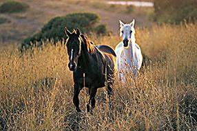 Ein Herz für Pferde Szenenbild 4