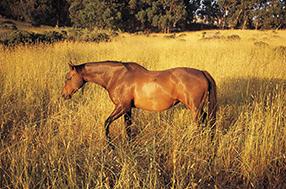 Ein Herz für Pferde Szenenbild 6
