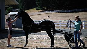 Ein Herz für Pferde Szenenbild 7
