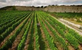 Die Weinmacher Szenenbild 2