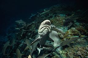 700 Haie In Der Nacht Szenenbild 2