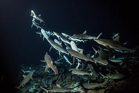 700 Haie in der Nacht Szenenbild 3