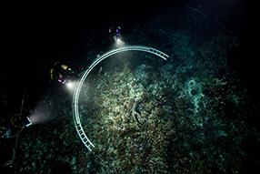 700 Haie in der Nacht Szenenbild 4