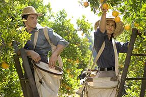 Die Orangenpflückerin Szenenbild 2