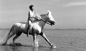 Das große Pferdeabenteuer Szenenbild 2