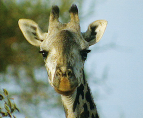Serengeti wird ewig leben Szenenbild 1