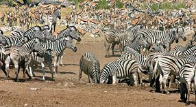 Serengeti wird ewig leben Szenenbild 5