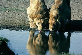 Serengeti wird ewig leben Szenenbild 6