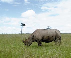 Serengeti wird ewig leben Szenenbild 7