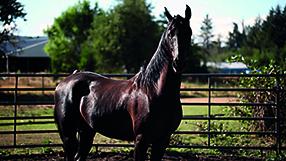 Meine große Pferde-Spielfilm Sammlung Szenenbild 1