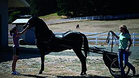 Meine große Pferde-Spielfilm Sammlung Szenenbild 2