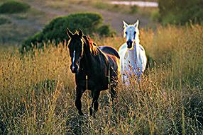 Meine große Pferde-Spielfilm Sammlung Szenenbild 4