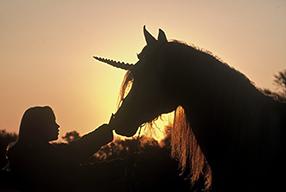 Meine große Pferde-Spielfilm Sammlung Szenenbild 5