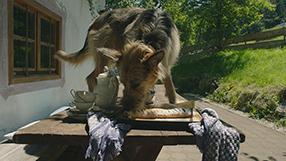 Racko - Ein Hund für alle Fälle Szenenbild 2