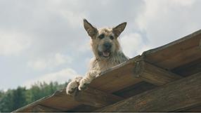Racko - Ein Hund für alle Fälle Szenenbild 7