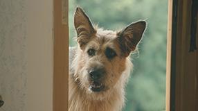 Racko - Ein Hund für alle Fälle Szenenbild 8