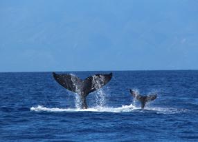 Humpback Whales 3D Szenenbild 1