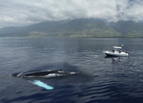 Humpback Whales 3D Szenenbild 3